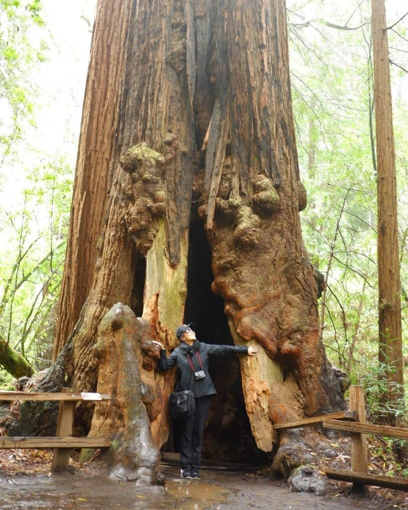 How to get to Muir Woods