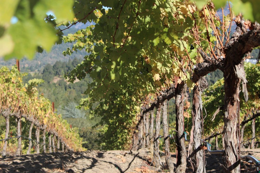 Best Sonoma Wine Tours