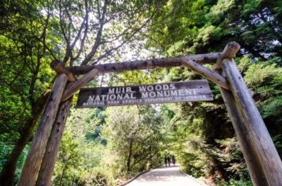 Muir Woods National Park Information