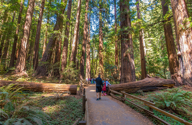 guided tour to Muir Woods from San Francisco